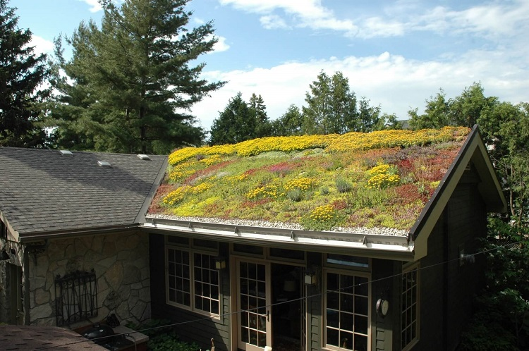 Your Roof Can Go Green