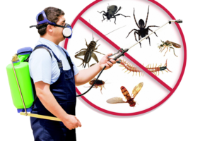 3 Pest Control Services That Are Frequently Asked For In the United Kingdom
