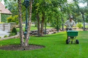 Transform Your Garden with a Landscape Specialist