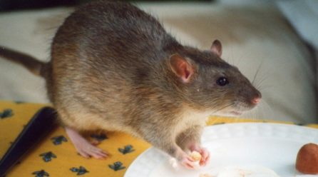 Top Tips for Keeping Mice & Rats Out of Your Property